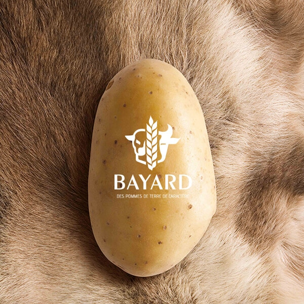 FoodConcept for the Maison Bayard